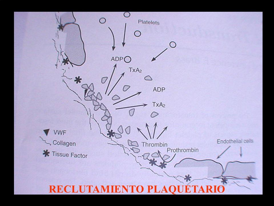 RECLUTAMIENTO PLAQUETARIO