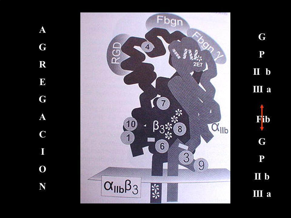 AGREGACIONAGREGACION G P II b III a G P II b III a Fib