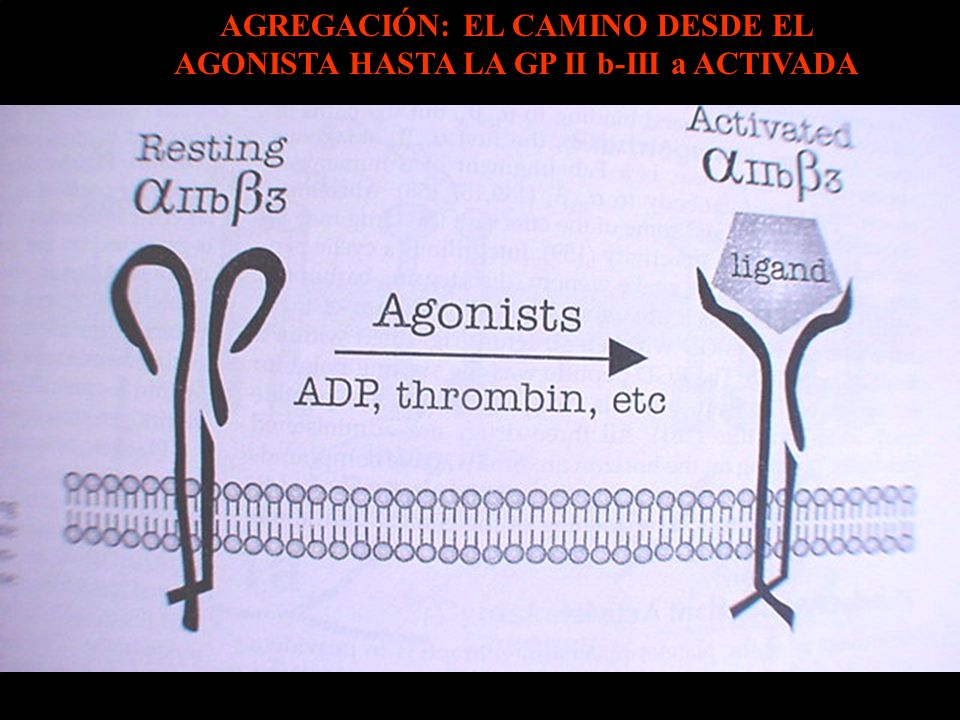 AGREGACIÓN: EL CAMINO DESDE EL AGONISTA HASTA LA GP II b-III a ACTIVADA