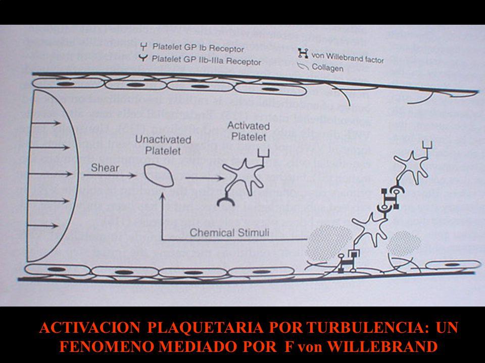 ACTIVACION PLAQUETARIA POR TURBULENCIA: UN FENOMENO MEDIADO POR F von WILLEBRAND
