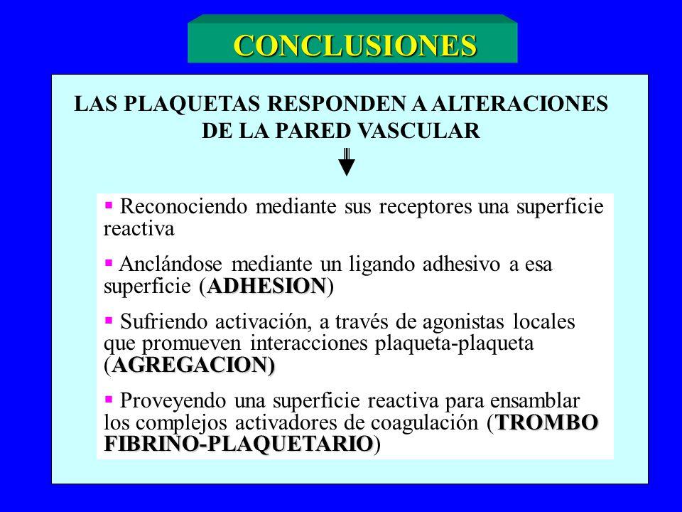 CONCLUSIONES LAS PLAQUETAS RESPONDEN A ALTERACIONES DE LA PARED VASCULAR Reconociendo mediante sus receptores una superficie reactiva ADHESION Anclánd
