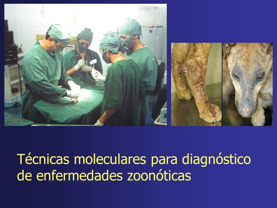 Técnicas moleculares para diagnóstico de enfermedades zoonóticas