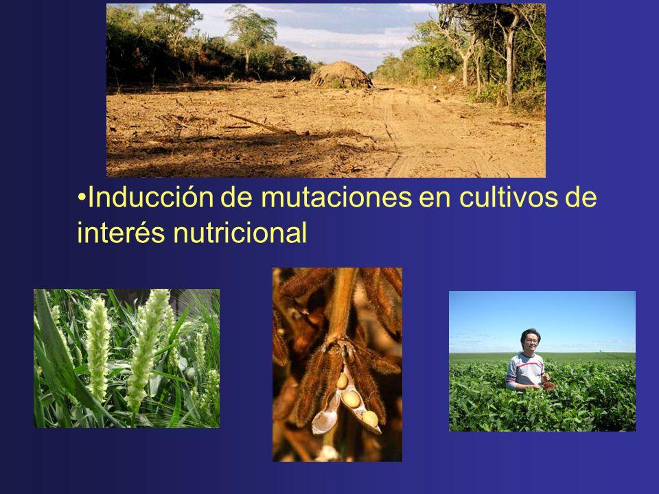 Inducción de mutaciones en cultivos de interés nutricional