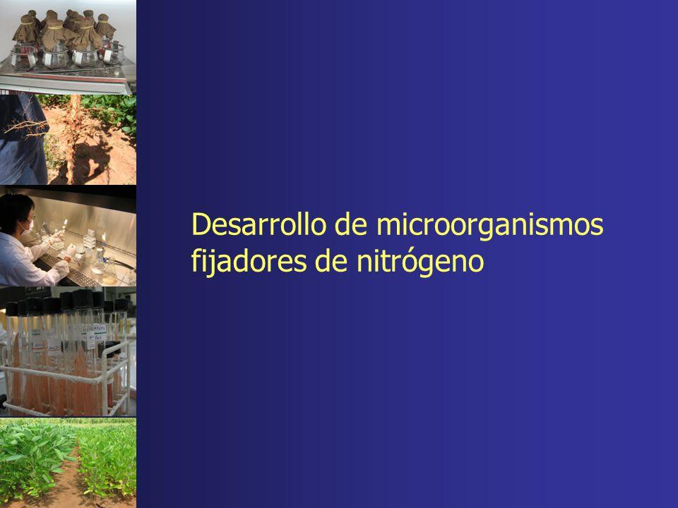Desarrollo de microorganismos fijadores de nitrógeno