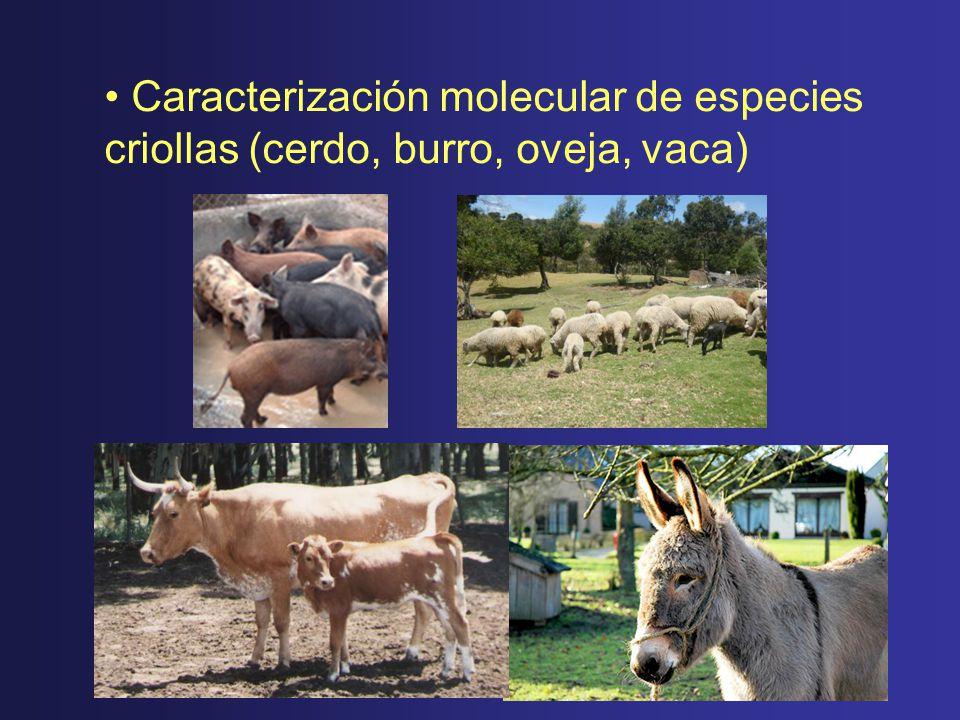 Caracterización molecular de especies criollas (cerdo, burro, oveja, vaca)