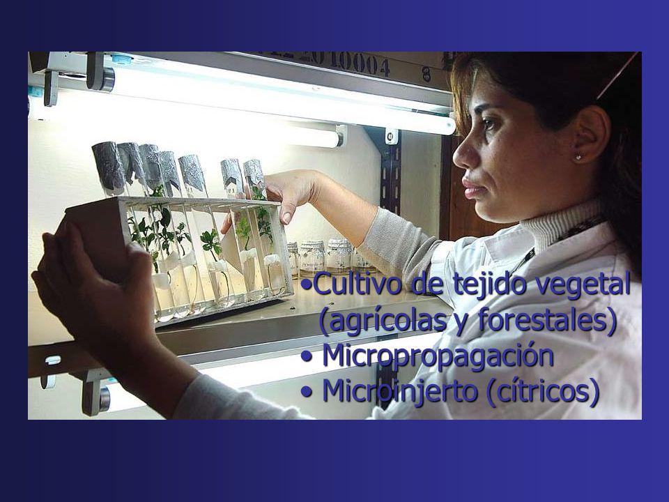 Cultivo de tejido vegetalCultivo de tejido vegetal (agrícolas y forestales) (agrícolas y forestales) Micropropagación Micropropagación Microinjerto (c