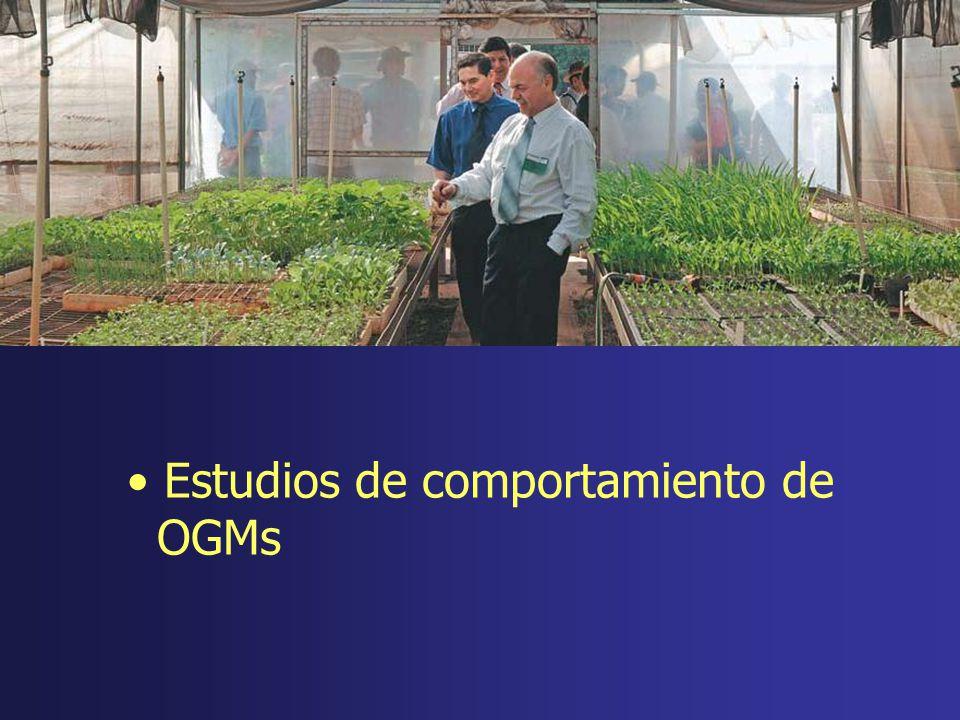Estudios de comportamiento de OGMs
