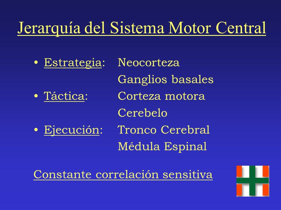 Tractos Espinales Descendentes Vía Ventromedial Tractos vestibuloespinal y tectoespinal: controlan la posición de la cabeza y del cuello Tractos retic