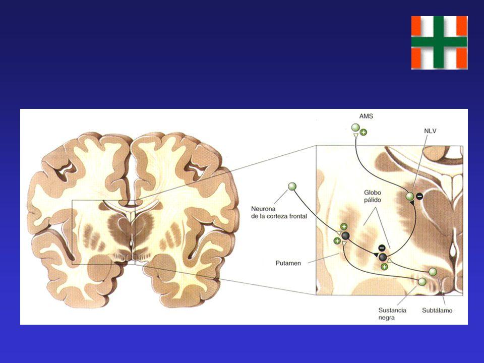 Circuitos Corteza – Ganglios Basales - Corteza CORTEZA - AMS ESTRIADO TALAMO GLOBO PALIDO Selección e inicio de los movimientos SENSITIV O CEREBELO