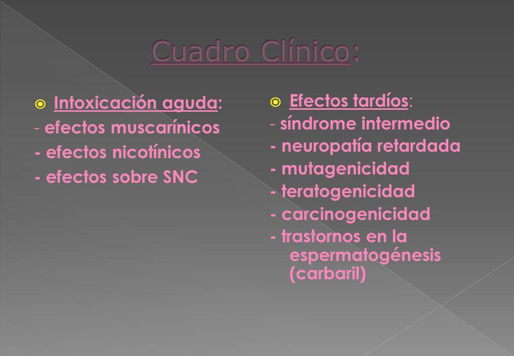 Intoxicación aguda: - efectos muscarínicos - efectos nicotínicos - efectos sobre SNC Efectos tardíos: - síndrome intermedio - neuropatía retardada - m