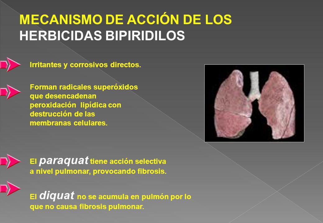MECANISMO DE ACCIÓN DE LOS HERBICIDAS BIPIRIDILOS Irritantes y corrosivos directos. Forman radicales superóxidos que desencadenan peroxidación lipídic