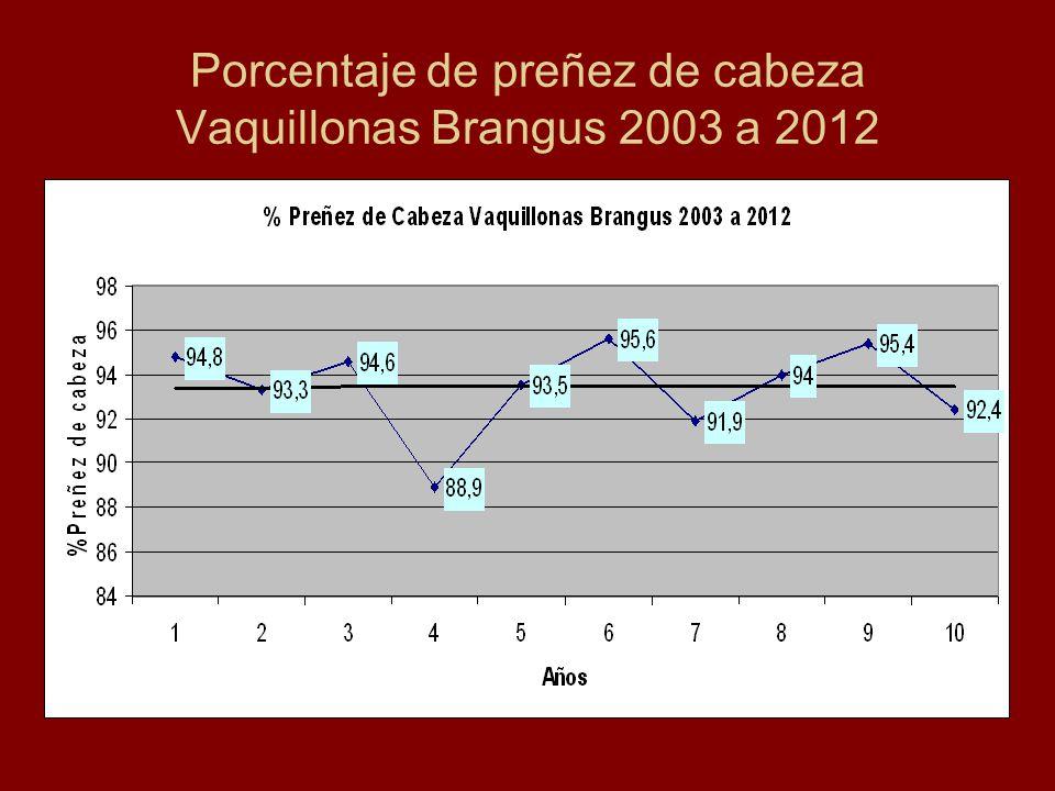 Porcentaje de preñez de cabeza Vaquillonas Brangus 2003 a 2012
