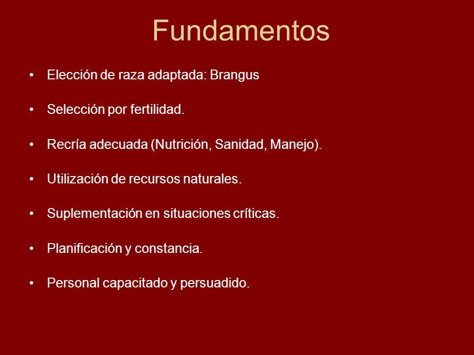 Fundamentos Elección de raza adaptada: Brangus Selección por fertilidad. Recría adecuada (Nutrición, Sanidad, Manejo). Utilización de recursos natural