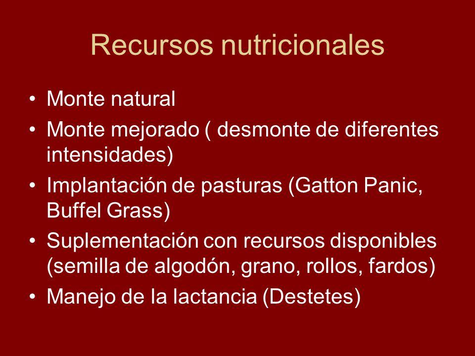 Recursos nutricionales Monte natural Monte mejorado ( desmonte de diferentes intensidades) Implantación de pasturas (Gatton Panic, Buffel Grass) Suple