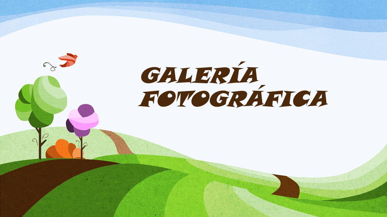 GALERÍA FOTOGRÁFICA