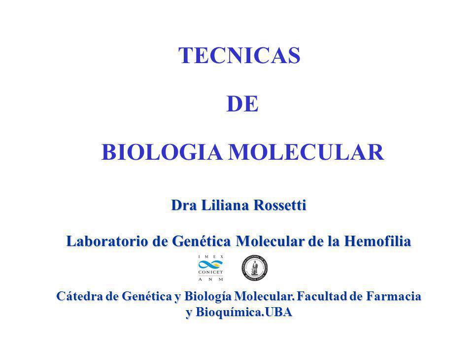 TECNICAS DE BIOLOGIA MOLECULAR Dra Liliana Rossetti Laboratorio de Genética Molecular de la Hemofilia Cátedra de Genética y Biología Molecular. Facult