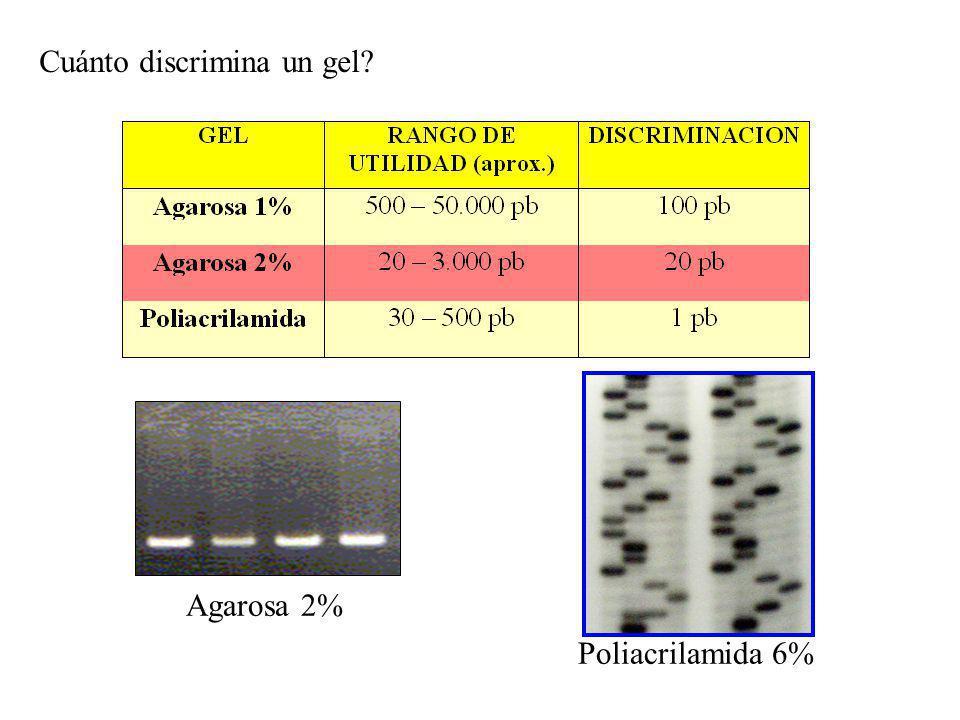 Cuánto discrimina un gel? Agarosa 2% Poliacrilamida 6%