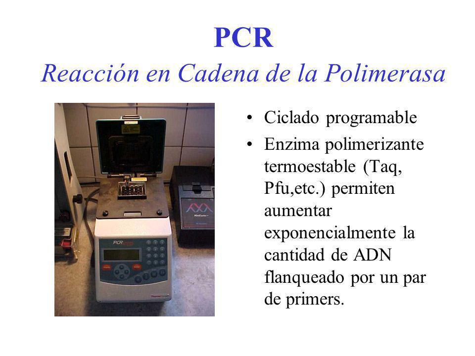 PCR Reacción en Cadena de la Polimerasa Ciclado programable Enzima polimerizante termoestable (Taq, Pfu,etc.) permiten aumentar exponencialmente la ca