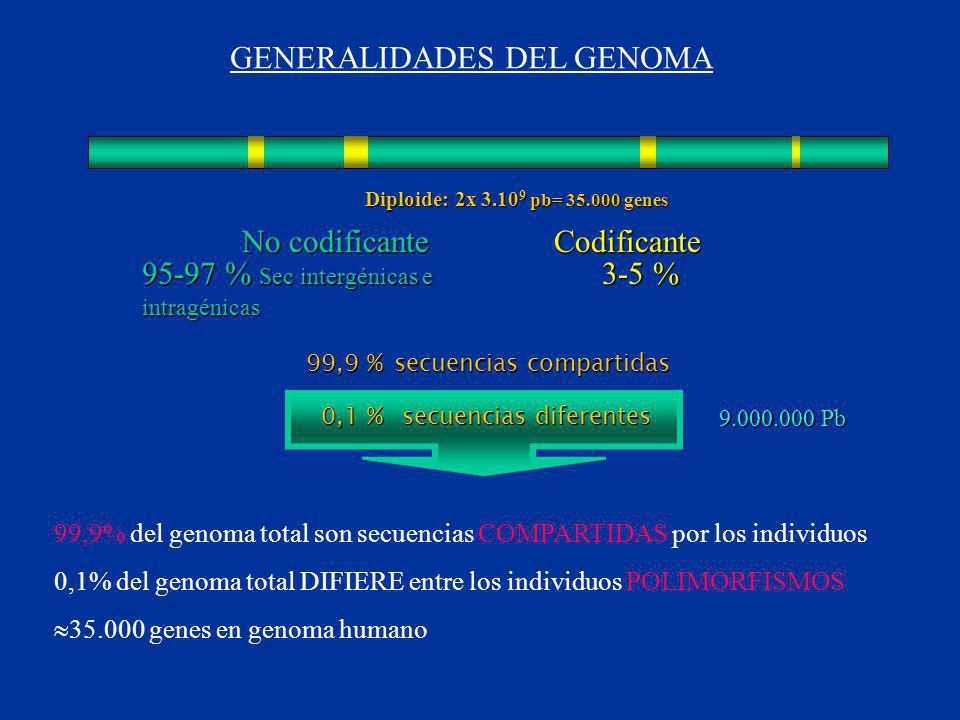 secuencias compartidas secuencias diferentes No codificante Codificante 95-97 % Sec intergénicas e intragénicas 3-5 % 99,9 % 0,1 % Diploide: 2x 3.10 9 pb= 35.000 genes 9.000.000 Pb 9.000.000 Pb 99,9% del genoma total son secuencias COMPARTIDAS por los individuos 0,1% del genoma total DIFIERE entre los individuos POLIMORFISMOS 35.000 genes en genoma humano GENERALIDADES DEL GENOMA