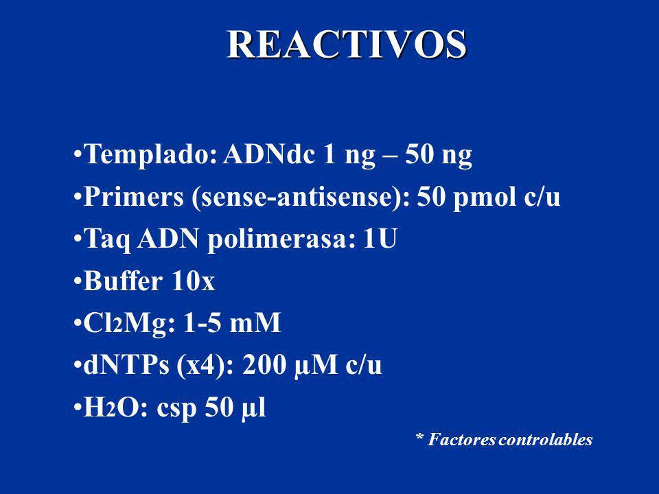 REACTIVOS Templado: ADNdc 1 ng – 50 ng Primers (sense-antisense): 50 pmol c/u Taq ADN polimerasa: 1U Buffer 10x Cl 2 Mg: 1-5 mM dNTPs (x4): 200 µM c/u