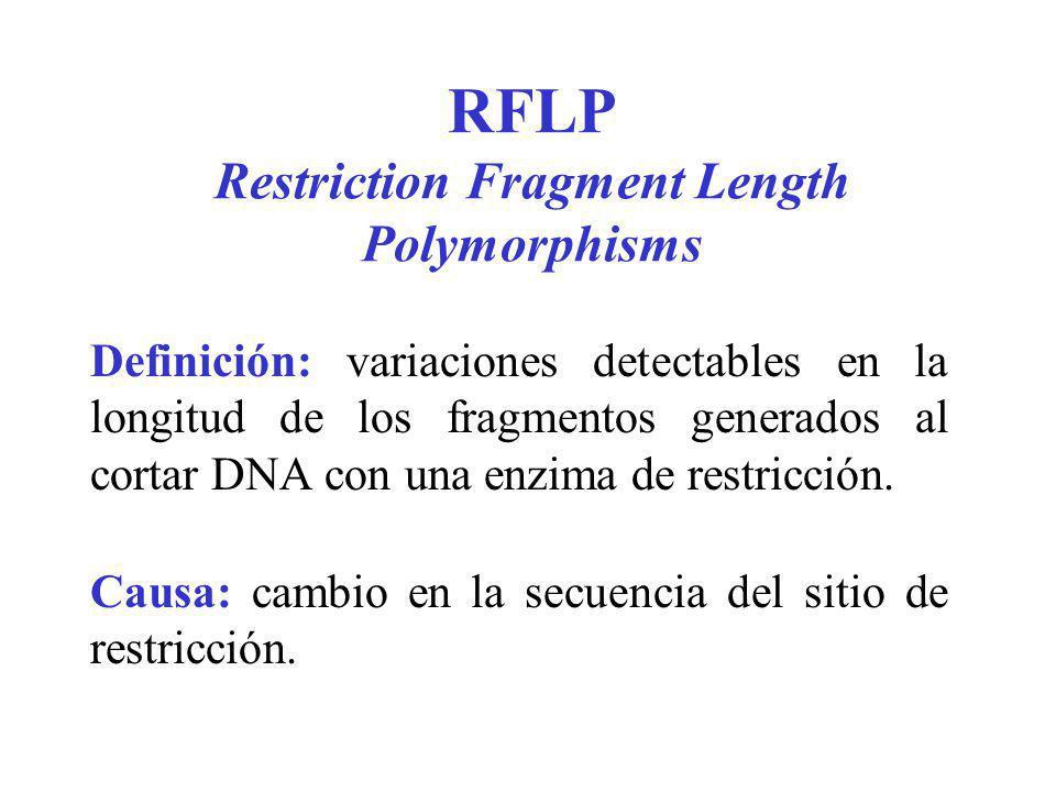 RFLP Restriction Fragment Length Polymorphisms Definición: variaciones detectables en la longitud de los fragmentos generados al cortar DNA con una en