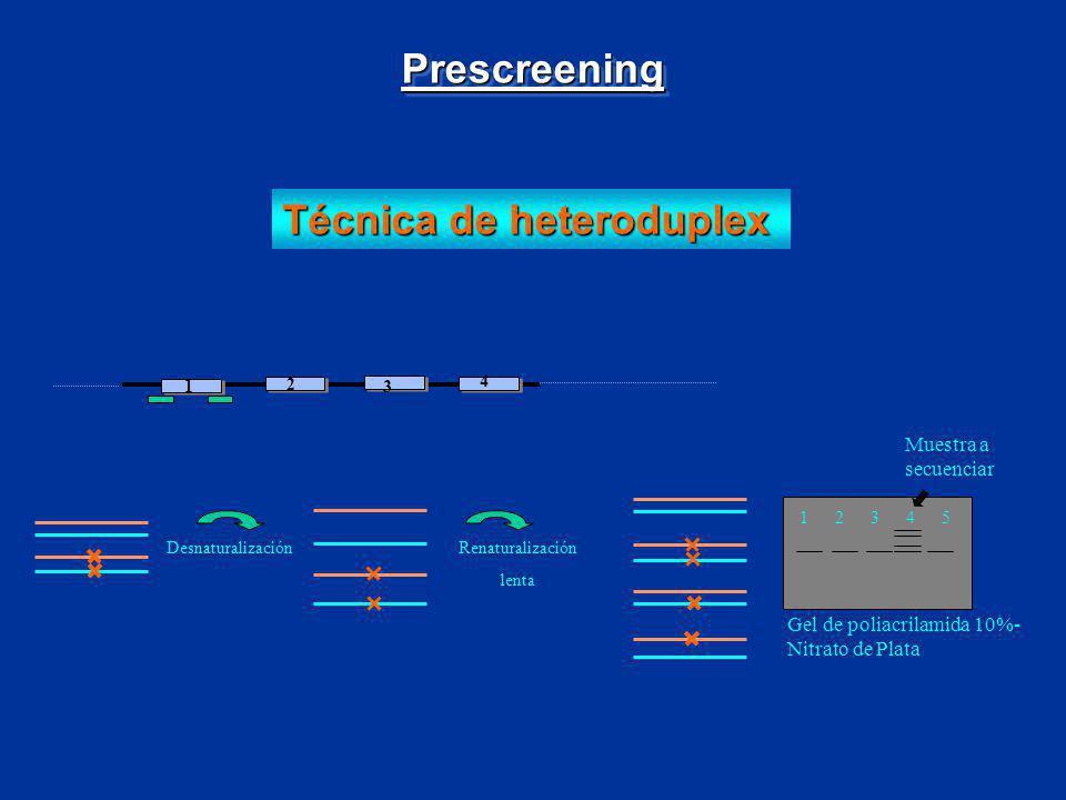 Técnica de heteroduplex 1 2 3 4 Desnaturalización 1 2 3 4 5 Muestra a secuenciar Gel de poliacrilamida 10%- Nitrato de Plata Renaturalización lenta Pr