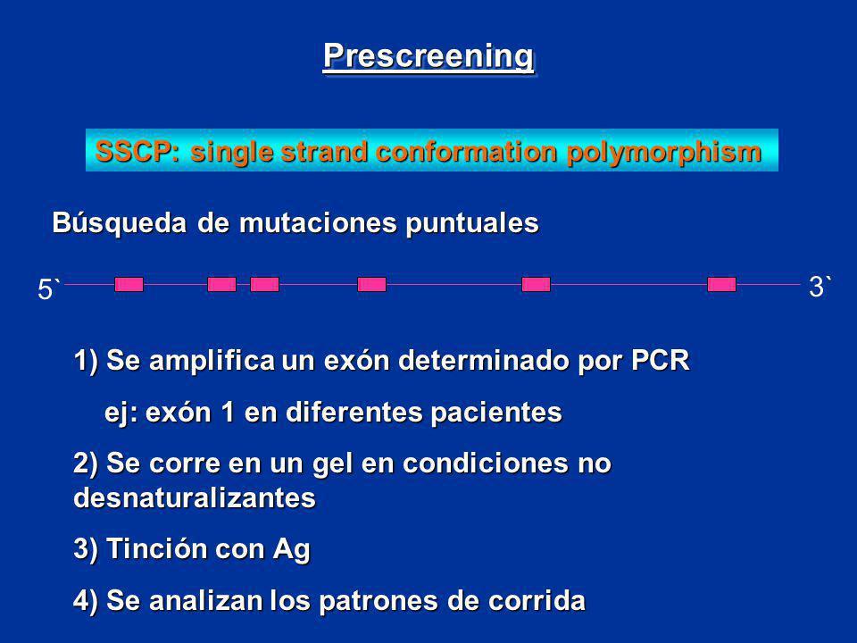SSCP: single strand conformation polymorphism 5` 3` Búsqueda de mutaciones puntuales 1) Se amplifica un exón determinado por PCR ej: exón 1 en diferen