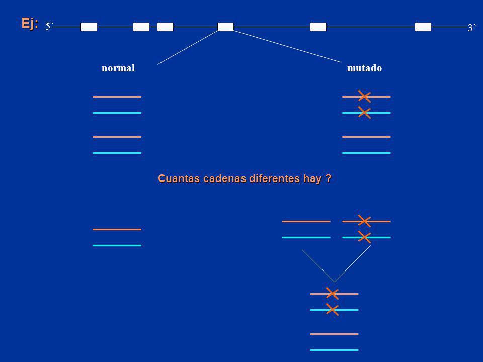 Ej: normalmutado 5` 3` Cuantas cadenas diferentes hay ?