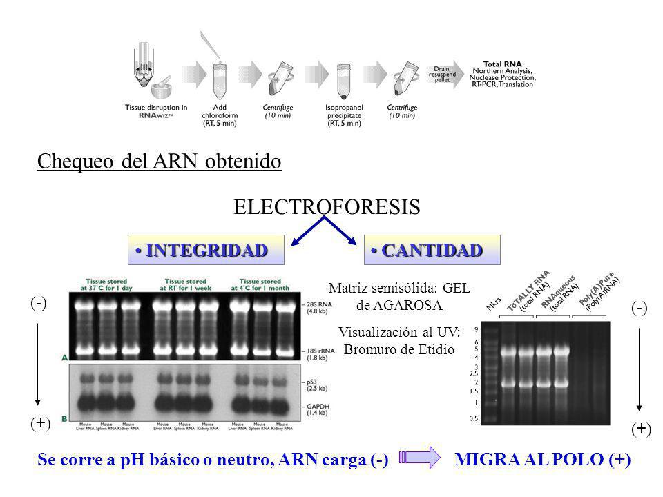 Chequeo del ADN obtenido ESPECTROFOTOMETRÍAESPECTROFOTOMETRÍA PurezaRelación 260nm / 280nm 1,8-2 Concentración1D.O.