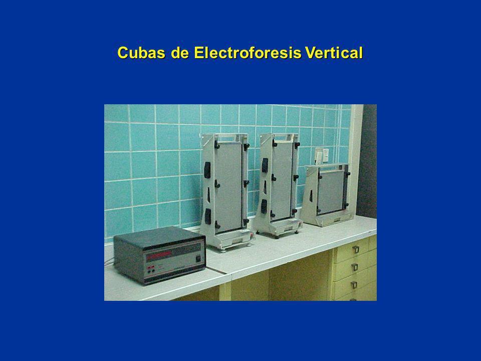 Cubas de Electroforesis Vertical
