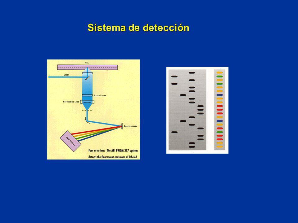 Sistema de detección