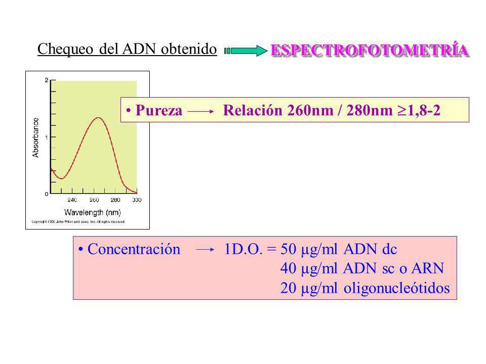 Chequeo del ADN obtenido ESPECTROFOTOMETRÍAESPECTROFOTOMETRÍA PurezaRelación 260nm / 280nm 1,8-2 Concentración1D.O. = 50 µg/ml ADN dc 40 µg/ml ADN sc
