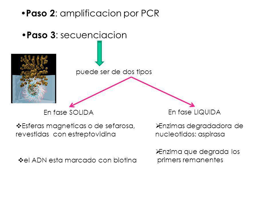 Paso 3 : secuenciacion En fase SOLIDA En fase LIQUIDA Esferas magneticas o de sefarosa, revestidas con estreptovidina puede ser de dos tipos el ADN es