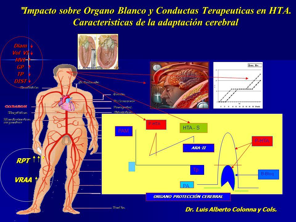 El control de la circulación Renal El impacto Hipertensivo y los lechos arterio arteriolares HTA Arteriola Aferente Arteriola Eferente Ra2-A/D 70% AT-