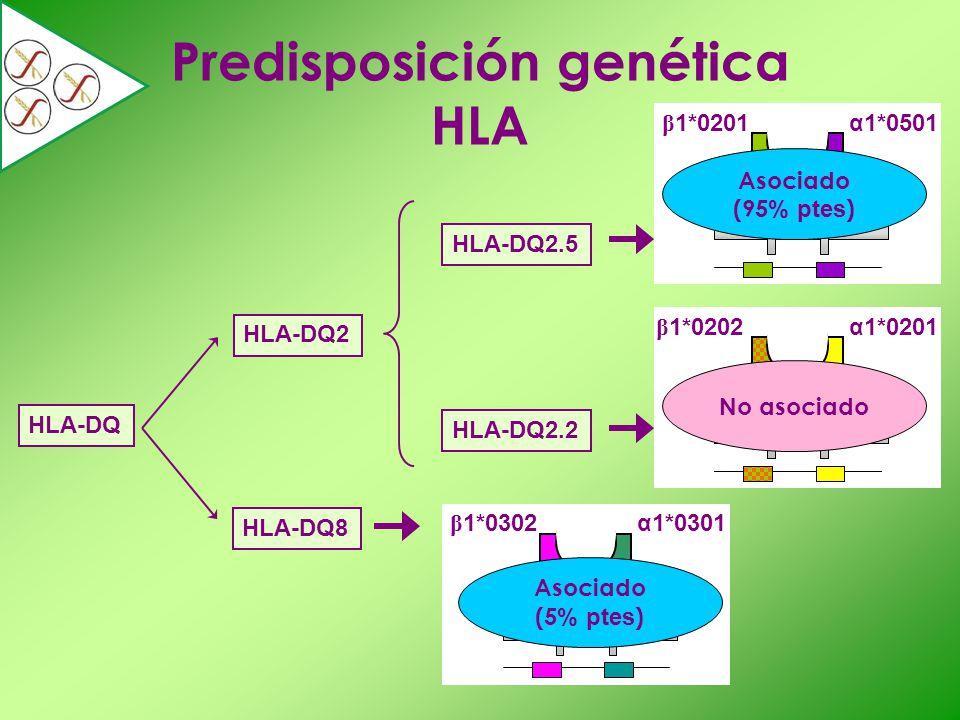 Predisposición genética HLA HLA-DQ HLA-DQ2 HLA-DQ8 HLA-DQ2.5 HLA-DQ2.2 α1*0501 β 1*0201 α1*0201 β 1*0202 β 1*0302α1*0301 Asociado (5 % ptes ) Asociado