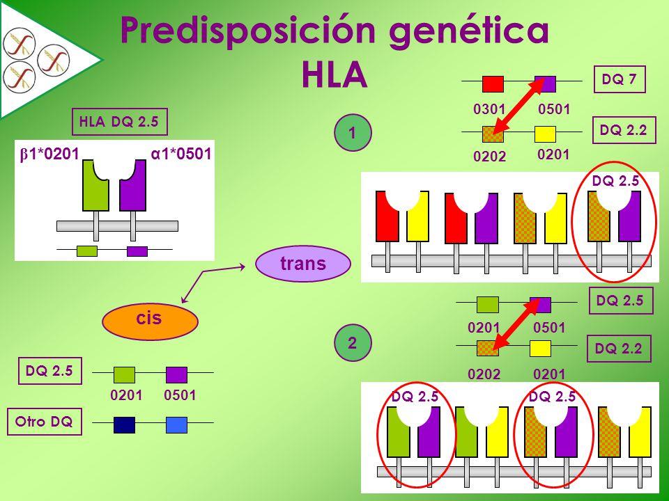 Predisposición genética HLA HLA DQ 2.5 cis DQ 2.5 Otro DQ 02010501 03010501 0202 0201 DQ 7 DQ 2.2 02010501 02020201 DQ 2.5 DQ 2.2 trans 1 2 DQ 2.5 α1*