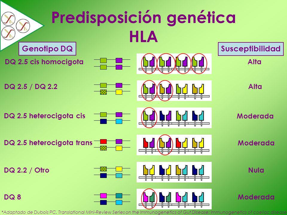 Predisposición genética HLA Genotipo DQ Susceptibilidad DQ 2.5 cis homocigota DQ 2.5 / DQ 2.2 Alta DQ 2.5 heterocigota cis DQ 2.5 heterocigota trans M