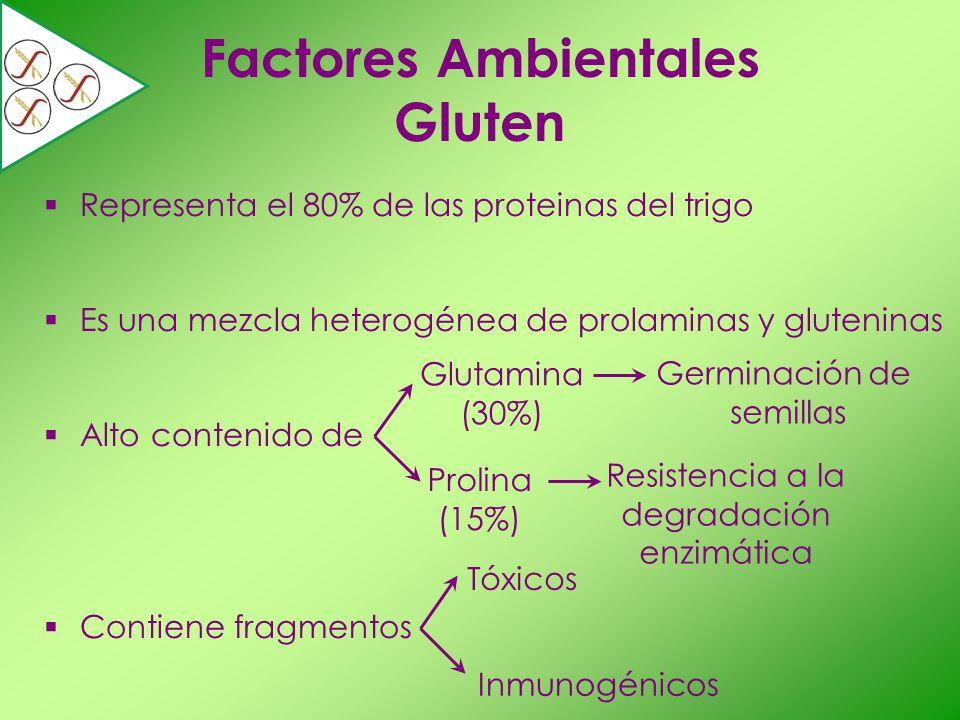 Representa el 80% de las proteinas del trigo Es una mezcla heterogénea de prolaminas y gluteninas Alto contenido de Contiene fragmentos Factores Ambie
