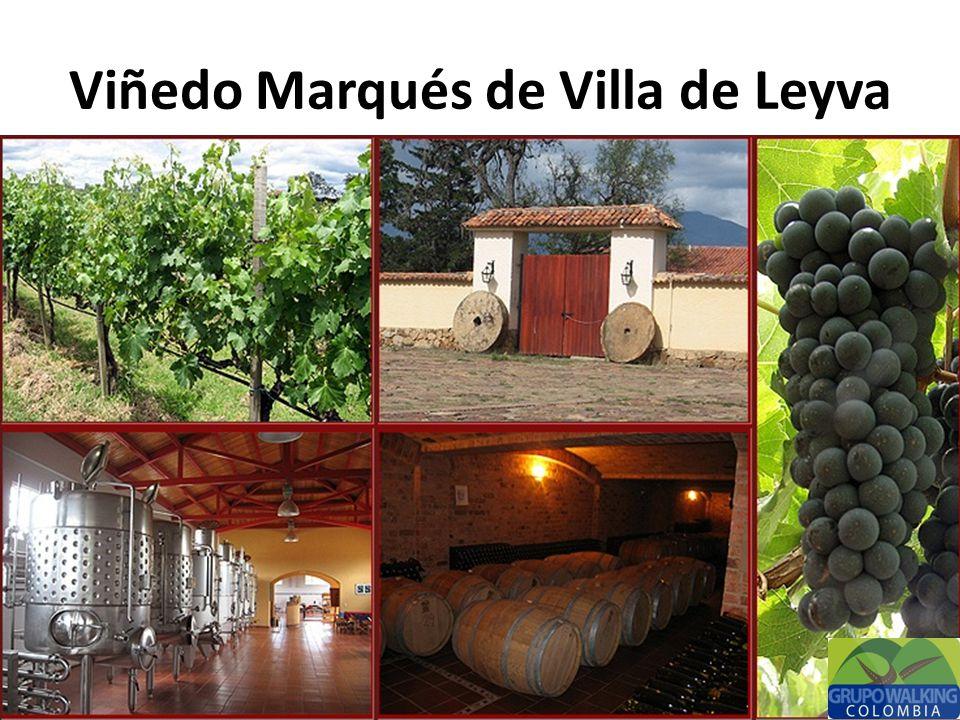Disfruta de un recorrido por uno de los viñedos mas reconocidos que tiene Colombia a nivel internacional, tu recorrido cuenta con: Visita a los cultivos de uvas Visita a la planta de producción Visita a la cava Degustación de vino Historia del viñedo