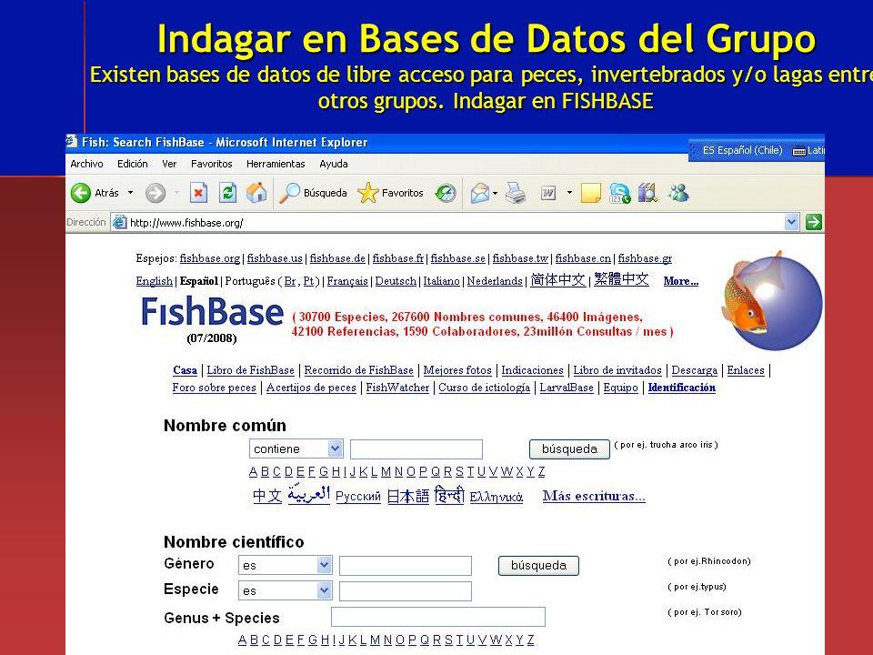 Indagar en Bases de Datos del Grupo Existen bases de datos de libre acceso para peces, invertebrados y/o lagas entre otros grupos. Indagar en FISHBASE