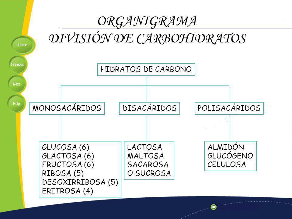 Home Previous Next Help ORGANIGRAMA DIVISIÓN DE CARBOHIDRATOS HIDRATOS DE CARBONO MONOSACÁRIDOSDISACÁRIDOSPOLISACÁRIDOS GLUCOSA (6) GLACTOSA (6) FRUCTOSA (6) RIBOSA (5) DESOXIRRIBOSA (5) ERITROSA (4) LACTOSA MALTOSA SACAROSA O SUCROSA ALMIDÓN GLUCÓGENO CELULOSA