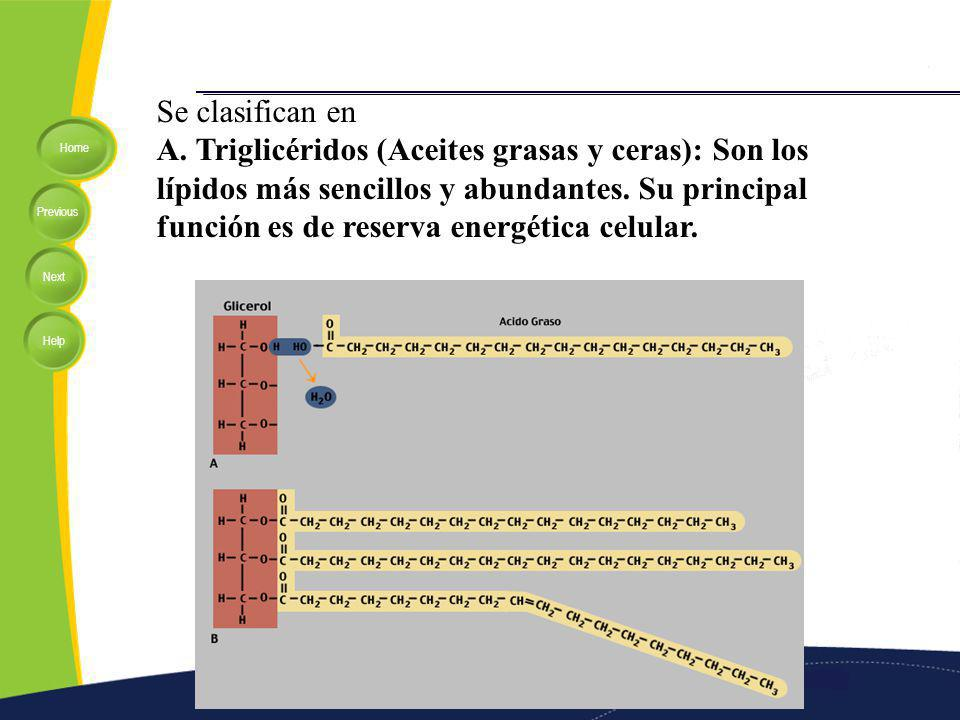 Home Previous Next Help Se clasifican en A. Triglicéridos (Aceites grasas y ceras): Son los lípidos más sencillos y abundantes. Su principal función e