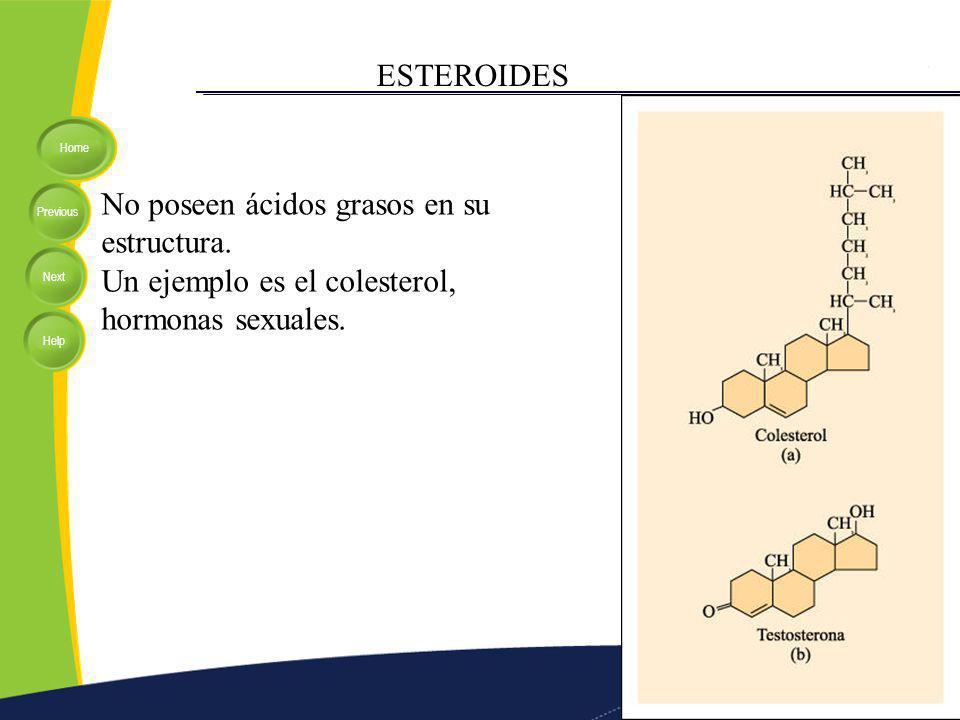 Home Previous Next Help ESTEROIDES No poseen ácidos grasos en su estructura. Un ejemplo es el colesterol, hormonas sexuales.