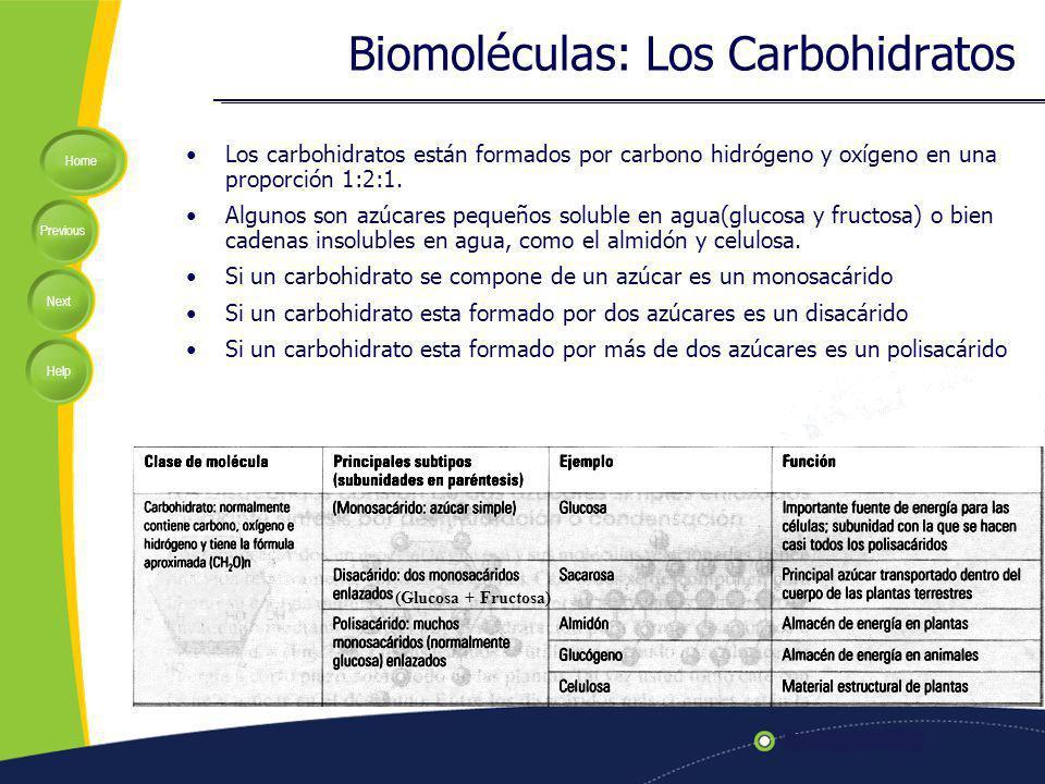 Home Previous Next Help Biomoléculas: Los Carbohidratos Los carbohidratos están formados por carbono hidrógeno y oxígeno en una proporción 1:2:1. Algu