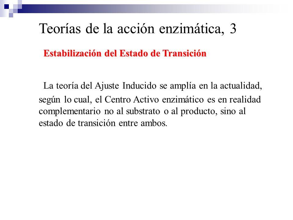 Teorías de la acción enzimática, 3 La teoría del Ajuste Inducido se amplía en la actualidad, Estabilización del Estado de Transición según lo cual, el