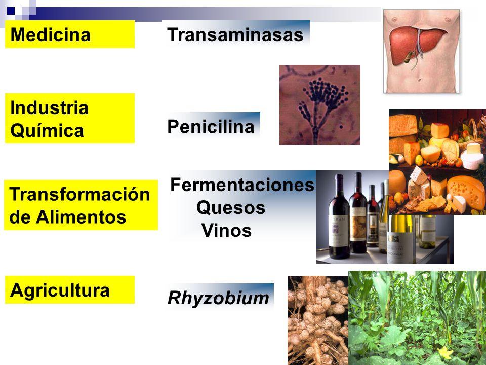 Transformación de Alimentos Fermentaciones Quesos Vinos MedicinaTransaminasas Industria Química Penicilina Agricultura Rhyzobium