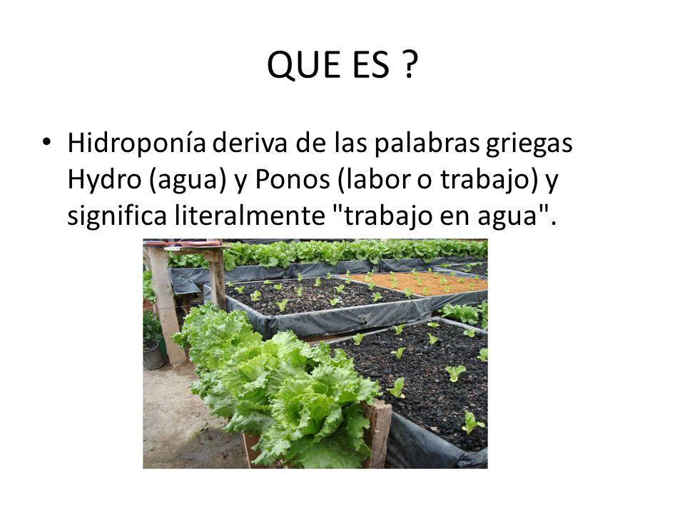 QUE ES ? Hidroponía deriva de las palabras griegas Hydro (agua) y Ponos (labor o trabajo) y significa literalmente