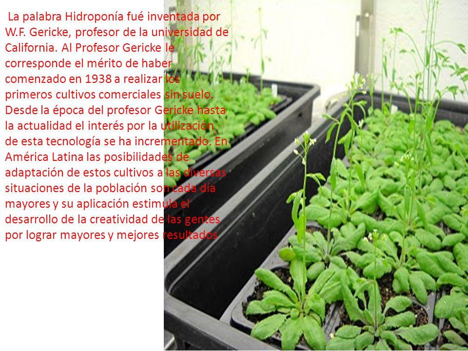 La palabra Hidroponía fué inventada por W.F. Gericke, profesor de la universidad de California. Al Profesor Gericke le corresponde el mérito de haber