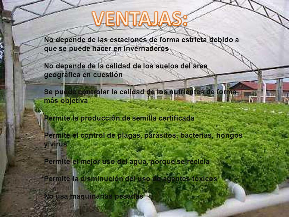 No depende de las estaciones de forma estricta debido a que se puede hacer en invernaderos No depende de la calidad de los suelos del área geográfica