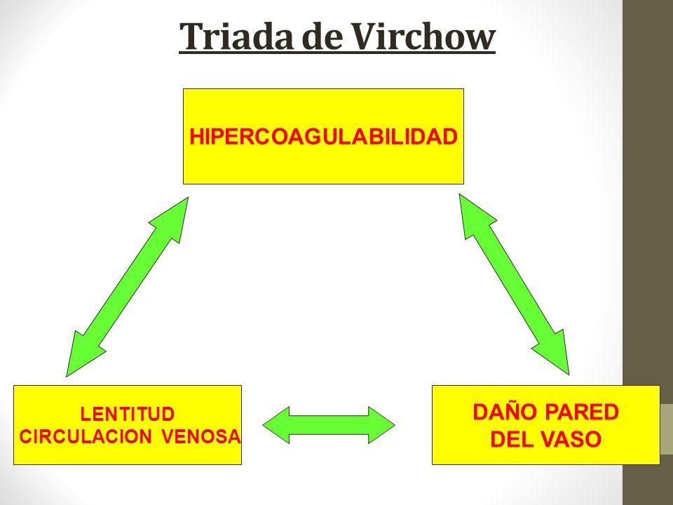 Triada de Virchow LENTITUD CIRCULACION VENOSA HIPERCOAGULABILIDAD DAÑO PARED DEL VASO